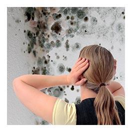 devis Traitement des termites dans la Haute-Garonne